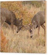 Mule Deer Bucks In Autumn Rite Of The Rut Wood Print