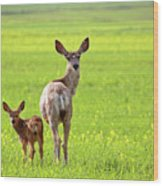 Mule Deer Doe And Fawn Looking Back Over Their Shoulders Wood Print