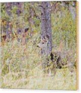 Mule Deer Doe In The Pike National Forest Wood Print