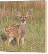 Mule Deer Fawn Is All Ears Wood Print