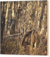Mule Deer In Aspen Thicket Wood Print