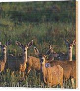 Mule Deer In Velvet 04 Wood Print