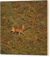 Mule Deer - Mattole Beach Wood Print