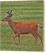 Mule Deer On The Sante Fe Trail Wood Print