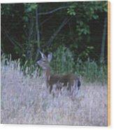 Mule Deer - Sinkyone Wilderness Wood Print