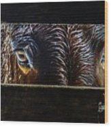 Mule Eyes Wood Print