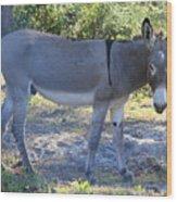 Mule In The Pasture Wood Print