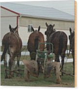 Mules At Rest Wood Print
