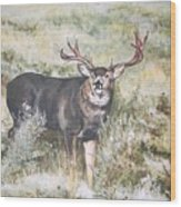 Muley Wood Print