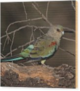 Mulga Parrot Female A Wood Print