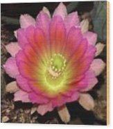Multi Color Flower Wood Print