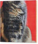 Multicolored Cat In Red Background  Wood Print