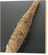 Mummy Of Crocodile, Egypt, 2000-1001 Bce Wood Print