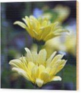 Mums In Bloom Wood Print