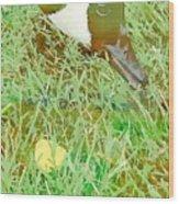 Munching On Green Grass Wood Print