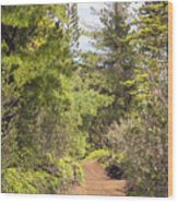 Munro Trail Wood Print by Ron Dahlquist - Printscapes