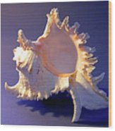 Murex Ramosus Seashell Wood Print