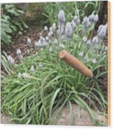 Muscari Blend Blue And White Wood Print