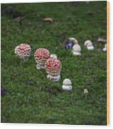 Muscaria Migration Wood Print