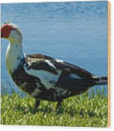 Muscovy Ducks Are Butt-ugly Wood Print