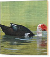 Muscovy Red Wood Print