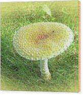 Mushroom - Amanita Muscaria Guessowii  Wood Print