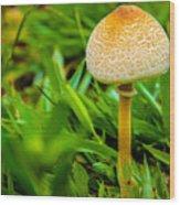 Mushroom And Grass Wood Print by Fabio Giannini