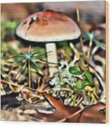 Mushroom And Moss Wood Print
