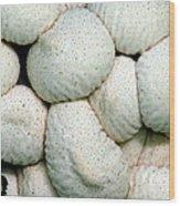 Mushroom Cluster Wood Print