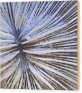 Mushroom Coral Wood Print