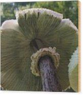 Mushroom Down Under  Wood Print