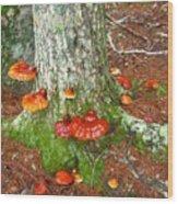 Mushroom Family Wood Print