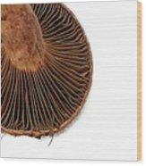 Mushroom Gills Wood Print