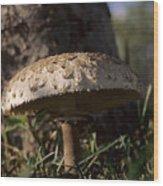 Mushroom II Wood Print