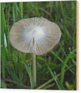 Mushroom In The Grass Wood Print