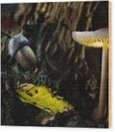 Mushroom Lantern Enchanted Forest Wood Print