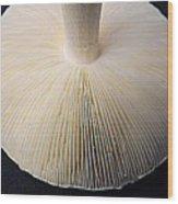 Mushroom Macro Expressionistic Effect Wood Print