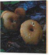 Mushroom Menagerie Wood Print