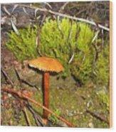 Mushroom Microcosm Wood Print
