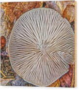 Mushroom On Fall Floor Wood Print