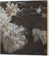 Mushroom On Idaho Log Wood Print
