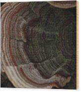 Mushroom Shells Wood Print