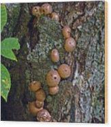 Mushroom Tree Trunk Wood Print