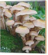 Mushrooms And Moss Wood Print