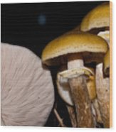 Mushrooms At Sundown Wood Print