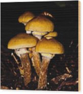 Mushrooms By Night Wood Print