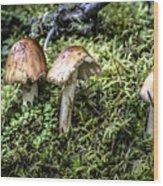 Mushrooms Trio Wood Print