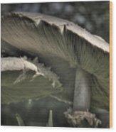 Mushrooms Wood Print