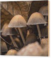 Mushrooms Hidden Between The Leaves Wood Print