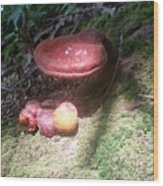 Mushrooms In Spotlight  Wood Print